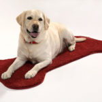 Your readers can win THIS dog bone rug!